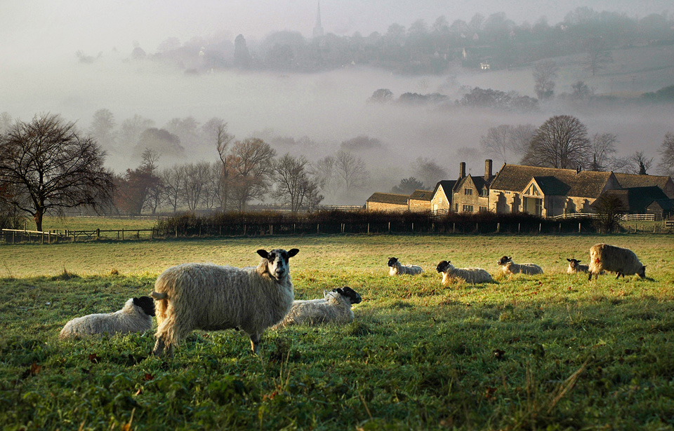 Sheep in the Painswick Valley